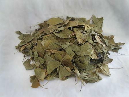 Ginkgo biloba tree application in folk medicine