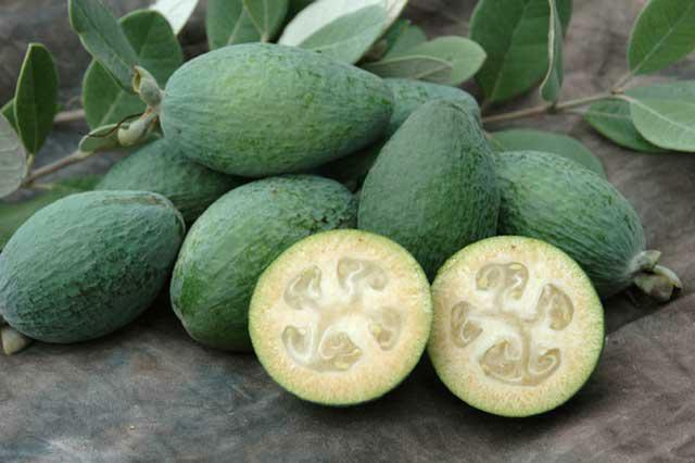 than feijoa is useful and at what diseases