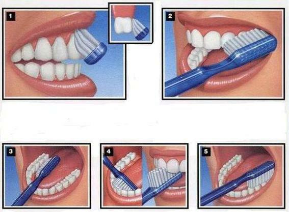 how to brush your teeth how many times a day
