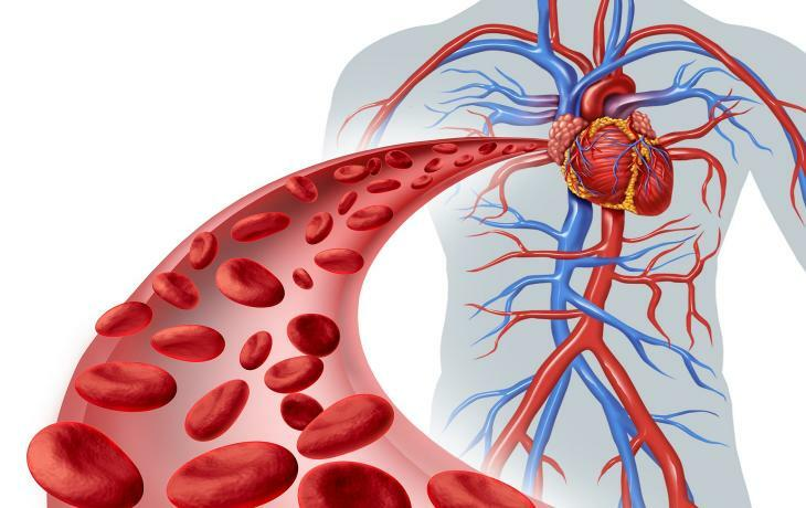 Arteries and veins of the great circle of blood circulation